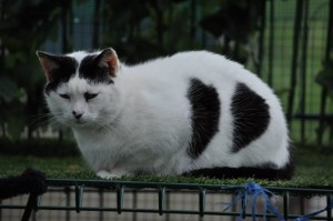 cat z